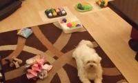 Hersenwerk voor honden met Bella