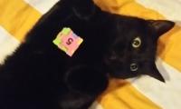 Hersenwerk voor katten met Smokey
