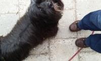Naar de hondenschool